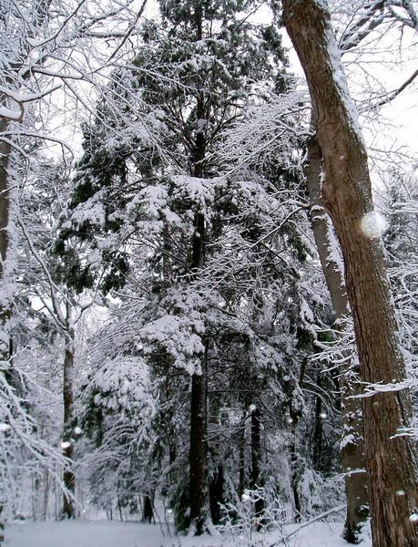Guildwood Park (2)