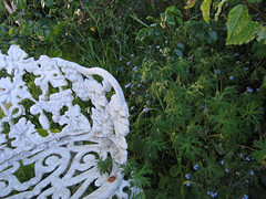 (Mitki) Tags: decorative montara forgetmenots yardfurniture martiesbackyard