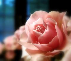 shy blush
