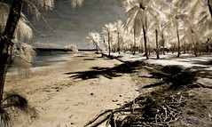 Beach by the Cheeca (Photomike07 / MDSimages.com) Tags: world travel trees light shadow red sky usa white texture beach water sepia clouds digital america keys landscape photography blog sand nikon media unitedstates florida south scenic roots palm east palmtrees processing infrared northamerica keywest d200 southeast stockisland processed infra tone hdr us1 monroecounty sunsetkey tankisland stucktextures michaelsteighner mdsimages hyliteproductions dredgerskey sigsbeepark photomike07 flemingkey mdsimagescom hylitecom