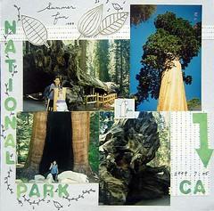 fresno-sequoia2