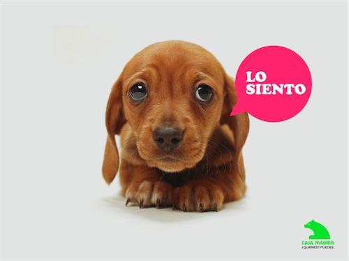 Anuncio de Caja Madrid, perrito bolindro