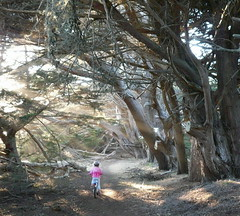 To boldly go (jurvetson) Tags: trees topf25 adventure arbres biking creativecommons boughs halfmoonbay vlo bravery hmb aventure wavecrest rameau spselection aplusphoto arborescent bravour arboral photocontesttnc08