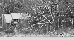 First Snow on Stricker's Pond (Mingfong) Tags: thanksgiving trees houses winter blackandwhite bw white lake snow monochrome wisconsin geese pond woods december snowy wildlife postcard explore story madison albumcover stories   middleton    strickerspond     mingfong   musicflyer  mingfongjan   artbrochure  sketchoflight mingfongphotography