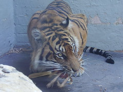 lunchtime at Taronga Zoo (Karybu) Tags: travel floraandfauna eastcoast australia20072008