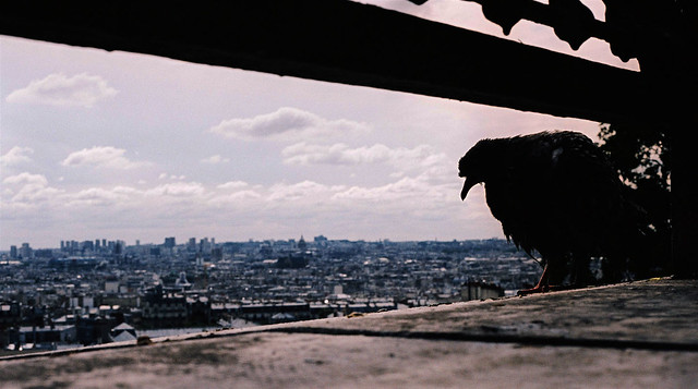 Pigeon Cityscape (Widescreen Wallpaper). Made into a desktop.