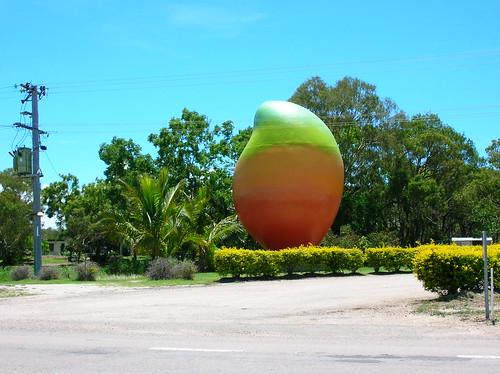 Mango gigante