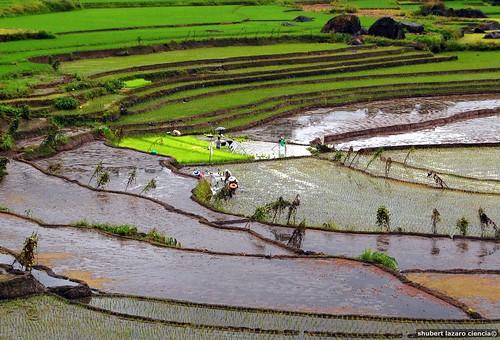 Nagacadan Rice Terraces (Kiangan, Ifugao)