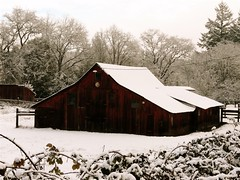 Fairbanks Barn (judi berdis) Tags: snow barn landscape nca willits mendocinoco failbanksbarn explore4901262008