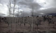 Burnt Land/ My Land (HORIZON) Tags: landscape persian scenery photographer searchthebest iran horizon persia explore burnt iranian inmotion ruch ziemia myland burntland avision szarość theeffectscomesfromshootingwhendriving samochd wypalona