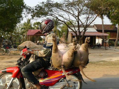 Cambodge - Angkor #233