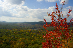 Red Tree Overlook