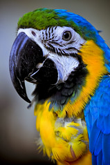 KL Bird Park (Kupih) Tags: park bird nikon malaysia kuala lumpur afs 70200mm d300 128g shutterhack vrnikkor kupih