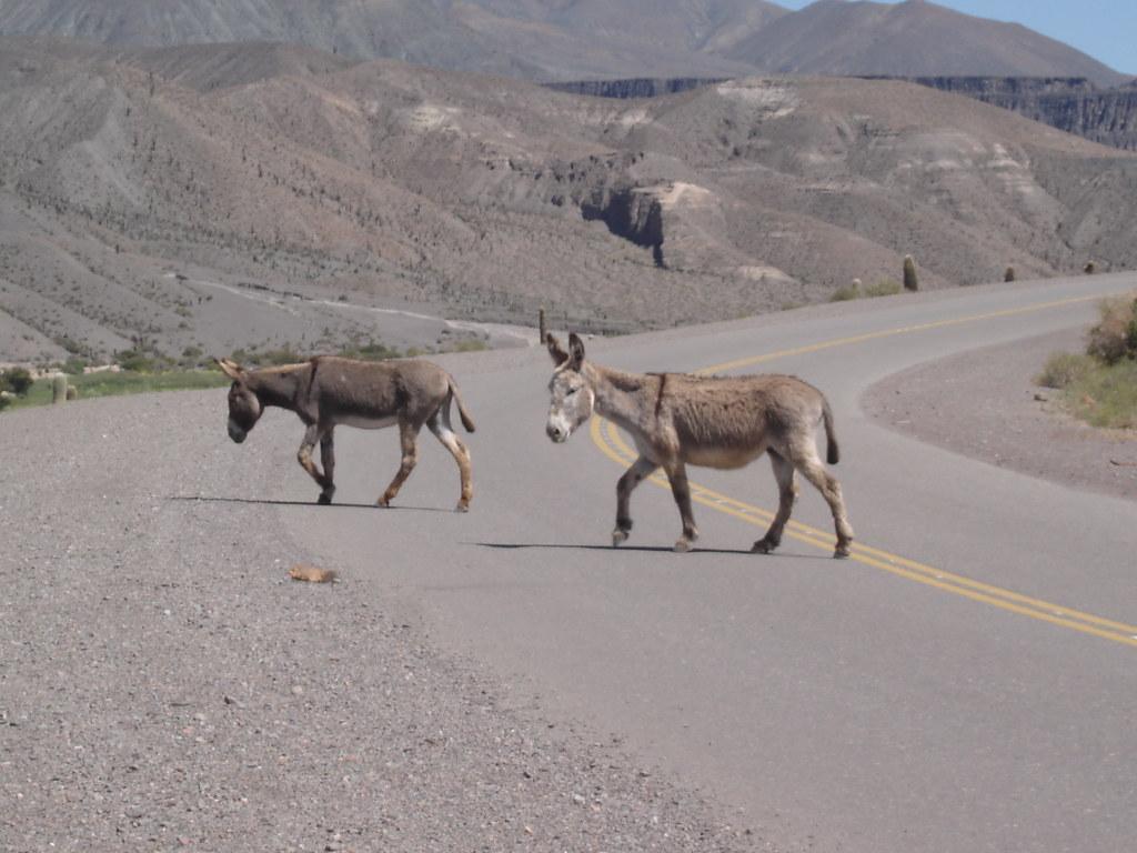 Paisajes manejando por las rutas argentinas