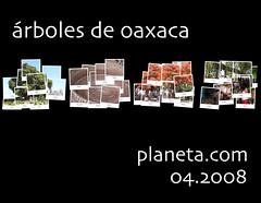 oaxaca trees (árboles de oaxaca)