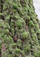 mosses (Vida Morkunas (seawallrunner)) Tags: nature washington path trail wa wilderness northcascades cwall northcascadesinstitute environmentallearningcentre