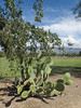 Differing verdancies of prickly pear and sportsfield. (Tim Kiser) Tags: 2015 20151007 arizona arizonalandscape brandifentonmemorialpark catalinafoothills catalinafoothillsarizona catalinafoothillslandscape img7570 october october2015 opuntia pimacounty pimacountyarizona pimacountyparks santacatalinamountains theloop tucson tucsonarizona tucsonlandscape tucsonmetropolitanarea athleticfield cactus chainlink chainlinkfence countypark differentgreens differingverdancies dirt distantmountains fence grass gravel landscape lawn mowed park parklandscape partlycloudy pricklypear pricklypearcactus soccerfield soccerfieldlandscape soil southarizona southeastarizona southeasternarizona southernarizona sportsfield sportsfieldlandscape treebranches turf turfgrass view wirefencing unitedstates