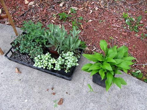 plants_from_grandma1
