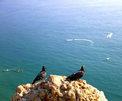 'Look at them mate... we should try it!' (Sandra_R) Tags: ocean light sea summer cliff nature water animals rock outdoors photography marine exterior pigeons details stio viewpoint naturalworld leiria clearwater nazar lifesciences blueribbonwinner abigfave anawesomeshot superbmasterpiece lifenatural