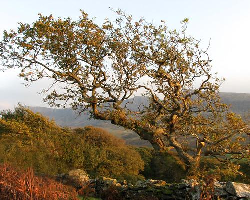 Windshaped tree