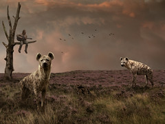 Hyenas on the moor (Mattijn) Tags: music tree cat guitar photomontage pino mattijn amersfoort hyenas dierenparkamersfoort purplemoorgrass wanderingthepurplemoor