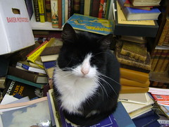 Boris in the Bookshop 2 (eagle stirreth) Tags: cats cat glasgow books boris bookshop voltaire rousseau