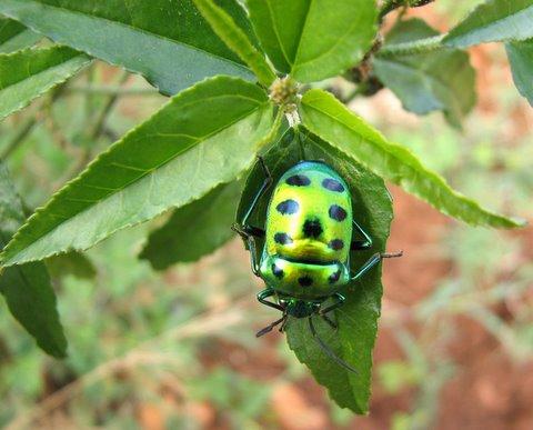 jewel bug 091107