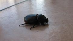 IMG_2812 (kn1046) Tags: 虫