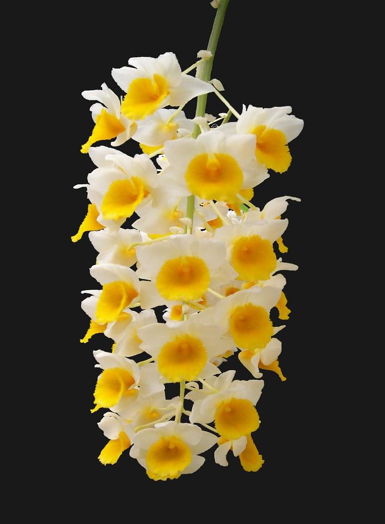 Immagine: Penca de flores...ou semáforo natural!! - book fotografico di Diego F.Antonello