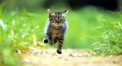 cat_3331 (gyakusan_reido) Tags: cats cat neko nya