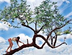 Mowgli (AnnuskA  - AnnA Theodora) Tags: blue wild sky tree braslia bravo climbing mowgli wolfgirl firstquality magicdonkey thejunglebook 3000v120f abigfave eliteimages life~asiseeit theskyinbrasliawasalwaysverybeautiful prettyhardphotototakespeciallybecauseitwashardtokeepthebalance thisisthefirstofasuicidalportraitseriesiplantodevelop ihaveagreatideaforanotheronebutillneedhelptoassureiwontgetkilledp