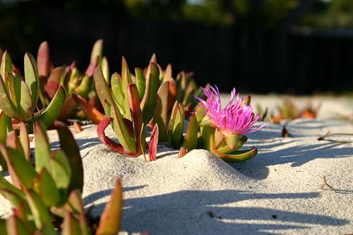 Secret Beach Garden