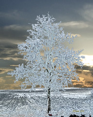 Ice Tree on Bright Sunset (Teikan-Do) Tags: winter sunset sky snow tree ice topf25 photomanipulation photoshop creativity frozen fireworks digitalart computerart soe lonelytree digitalmanipulation supershot mywinners abigfave anawesomeshot