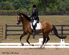 Dressage (smcarterphotos) Tags: show horses horse bay competition rider equestrian equine dressage
