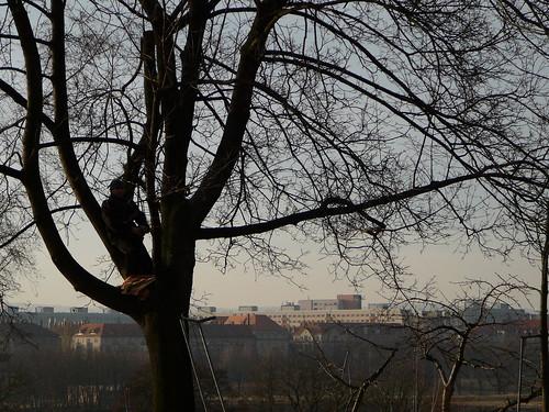 weitere besetzte Bäume (04)