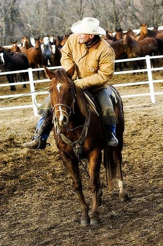 gathering mares 266