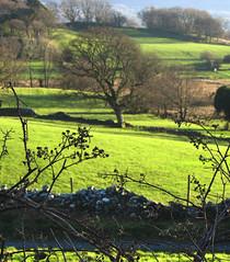 Brambles in February sunlight