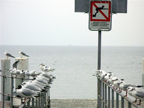 pigeons on a rail