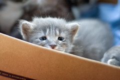 sad kitty... (bookgrl) Tags: pet cats baby cute animals furry kitty kittens kitties week3
