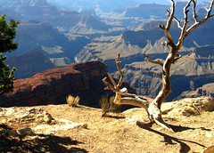 View from the south rim. (JannK) Tags: arizona grandcanyon loveit southrim goldenglobe blueribbonwinner mywinners goldenphotographer diamondclassphotographer flickrdiamond worldwidelandscapes ilovemypics natureselegantshots explorewinnersoftheworld viewfromthesouthrim thegalleryoffinephotography