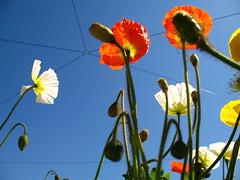 il cielo su Torino (asfal.TO) Tags: blue sky italy flores flower torino italia ciel cielo fiori turin subsonica ilcielosopratorino