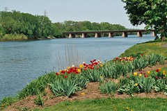 MOHAWK RIVER (MIKECNY) Tags: bridge flower green water grass river tulip mohawk schenectady