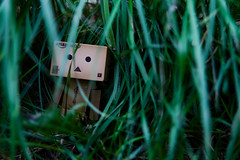 Danbo In The Jungle (craigmdennis) Tags: green nature grass trek garden jungle 365 danbo