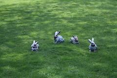 Zombie Rabbits!