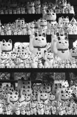 My favorite one is... (Yuki da!) Tags: cats film tokyo contax manekineko 猫 neopan1600 招き猫 豪徳寺 gotokuji フィルム 東京 japan 日本 コンタクス