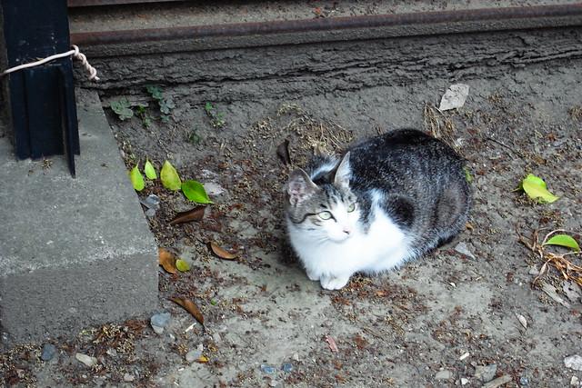 Today's Cat@2011-05-15
