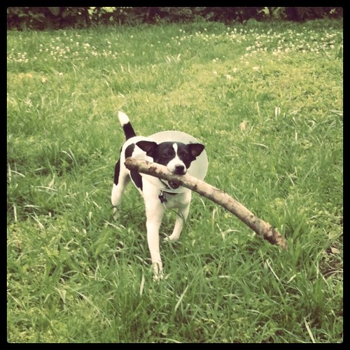 Found himself a big ol' stick!