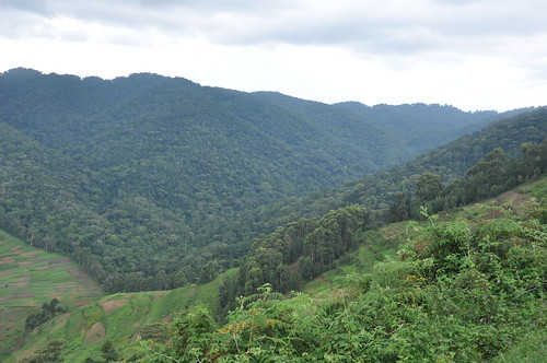 Edge of Bwindi Impenetrable forest