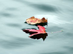 Leaves on river