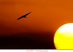 Gone .... (MoH911) Tags: sunset red orange sun moon black bird yellow sunrise sad sony gone saudi arabia kfupm supershot  moh911 saihat  saihatphoto saihatphotonet